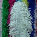 Ostrich Feather (White 01)