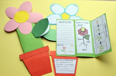 Grade 1, 2 ,3 Science Biology Activity Life Cycle of Plants