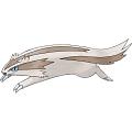 Linoone Plush (2nd, Generation III) from Pokemon